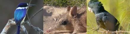 Friends of the Australian Wildlife Conservancy