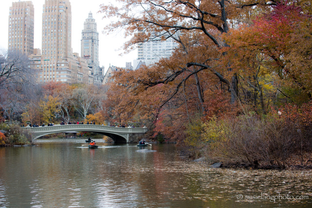 bridge in Central Park NYC
